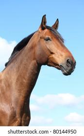 Portrait of bay horse on sky background