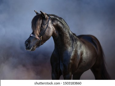 Portrait of beautiful black American miniature horse in light smoke.