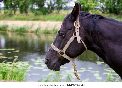 portrait of beautiful black horse outdoors by a river