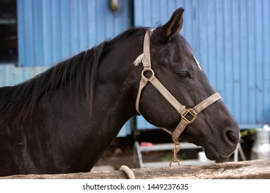 portrait of beautiful black horse outdoors