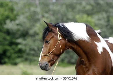 portrait of beautiful brown and white pony