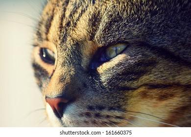 Portrait beautiful cat
