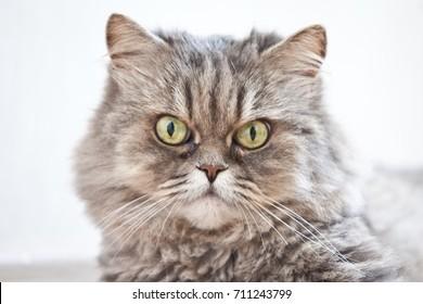 Portrait of beautiful cat