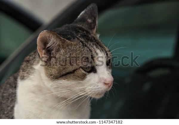 Portrait of the beautiful cat.