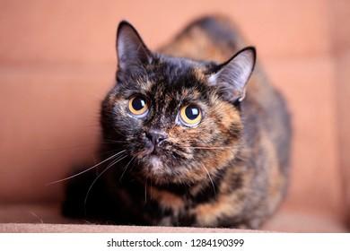 Portrait of a beautiful cat close up