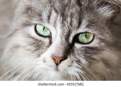 portrait of a beautiful cat in nature
