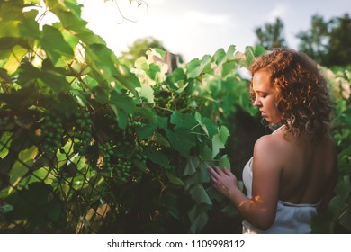 Portrait of a beautiful curly woman in a vineyard between grapes during sunset