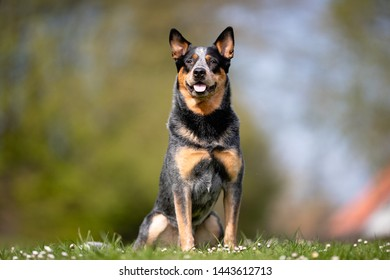 Portrait of beautiful dog breeds - Shutterstock ID 1443612713