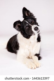 Portrait of beautiful dog breeds
