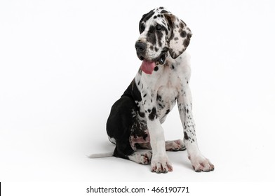 Portrait of a beautiful dog on a white background