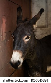 Portrait of a beautiful donkey in a stable stall