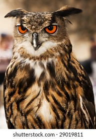 Portrait of a beautiful Eagle or Horned Owl also known as genus Bubo