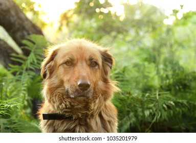 Portrait of a beautiful fluffy beige dog close up outdoors