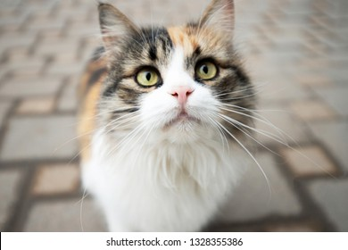 portrait of a beautiful fluffy cat on the background of paving tiles