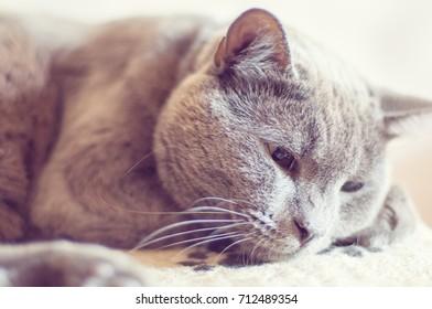 Portrait of beautiful gray cat