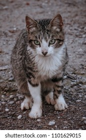 Portrait of a beautiful homless street cat with a nice eyes living alone  , Casablanca, Morocco