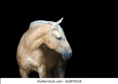 Portrait of a beautiful horse isolated on black background.