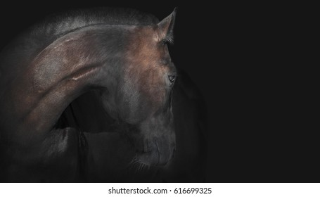 Portrait of a beautiful horse on a dark brown background.