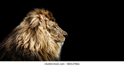 Lion Eyes Images Stock Photos Vectors Shutterstock