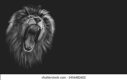 Portrait of a beautiful lion and copy space