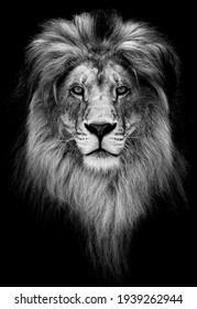 Portrait of a Beautiful lion, lion in dark.