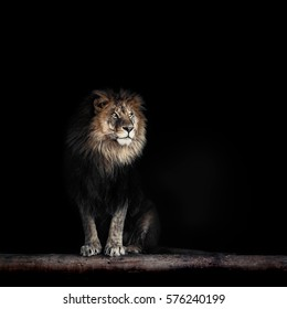 Portrait of a Beautiful lion, lion in dark
