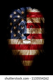 Portrait of a Beautiful lion, lion in dark. Portrait of a leader. king. Portrait of a lion with a projection of the flag of the United States. Patriot of his country