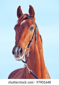 portrait of beautiful young red  horse sunny day