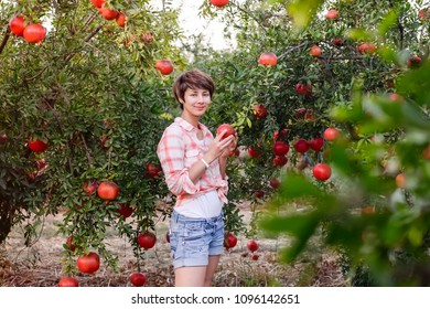 Portrait of Beautiful young woman in red checkered shirt looking at camera and picking ripe organic pomegrate fruits in the garden. Harvest time concept. Sunset light. selective focus, space for text
