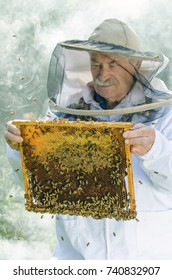 portrait of beekeeper with honeycomb in apiary