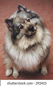 Portrait of Beko