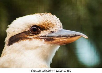portrait of a bird