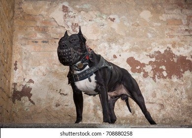 Dog Fight Images, Stock Photos & Vectors | Shutterstock