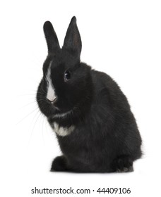 Portrait of Black baby rabbit sitting in front of white background, studio shot
