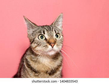 Portrait of a black and brown tabby cat looking to viewers right with confused perplexed shocked expression. Pink background with copy space.
