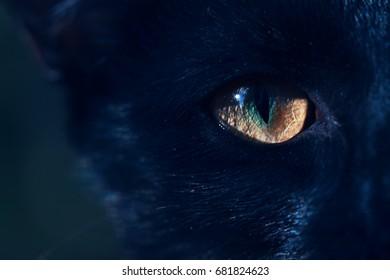 portrait of a black cat in the dark