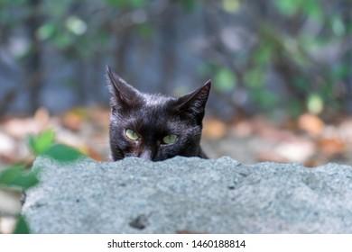 Portrait of black cat in the garden, peeking from rock, half face
