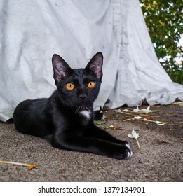 Portrait of black cat relax on ground
