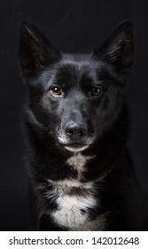 Portrait of a Black Dog