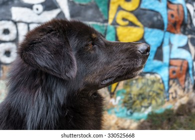 Portrait of a black dog on the background of a carved mani stone. Namche Bazaar, Everest region, Nepal