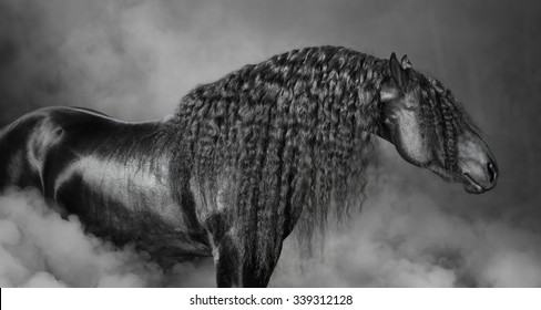 Portrait of black Frisian horse with long mane in the smoke, black and white photography