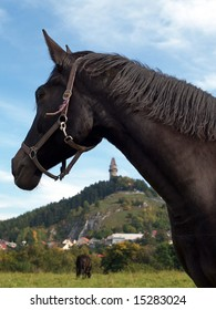 A portrait of a black horse with a landscape in the background