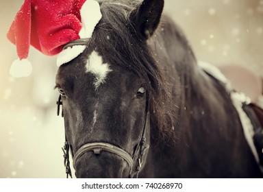 Portrait of a black horse in a a red Santa Claus hat d9aeb3db75d6