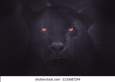 portrait of a black Jaguar in the dark