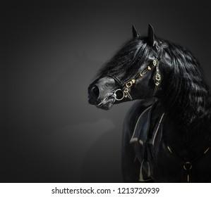 Portrait of black Pura Spanish stallion in authentic bridle on dark background.