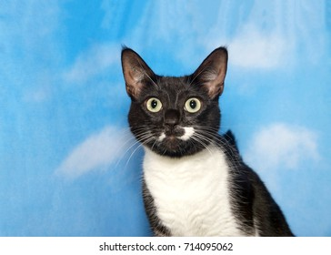 Portrait of a black and white tuxedo cat looking directly at viewer. Blue background sky with clouds