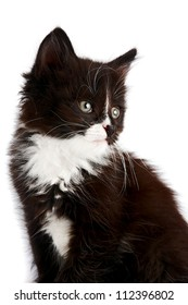 Portrait of a black-and-white kitten on a white background