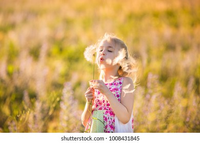 The portrait of blonde girl with big dandellion in the blossom field on the sunset