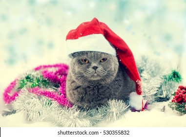 Portrait Of A Blue British Shorthaired Cat Wearing Santa Hat Lying In Colorful Christmas Tinsel