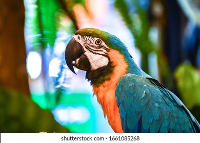 portrait of blue and yellow macaw parrot